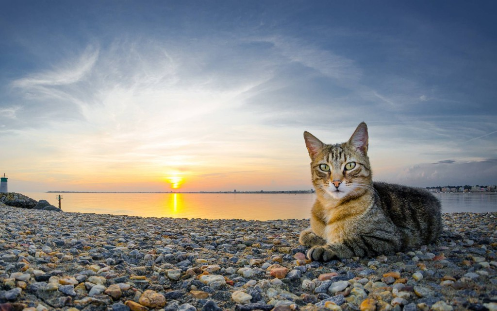 460192-cats-cat-on-the-beach