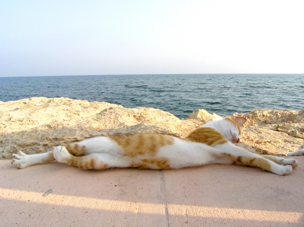 600px cat on beach shutterstock_27220642