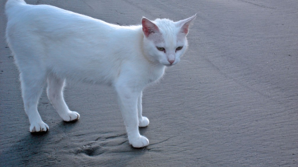 Cat-White-Beach-1080x1920