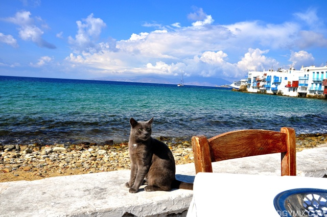 Cats-at-Mykonos-Beach-imp