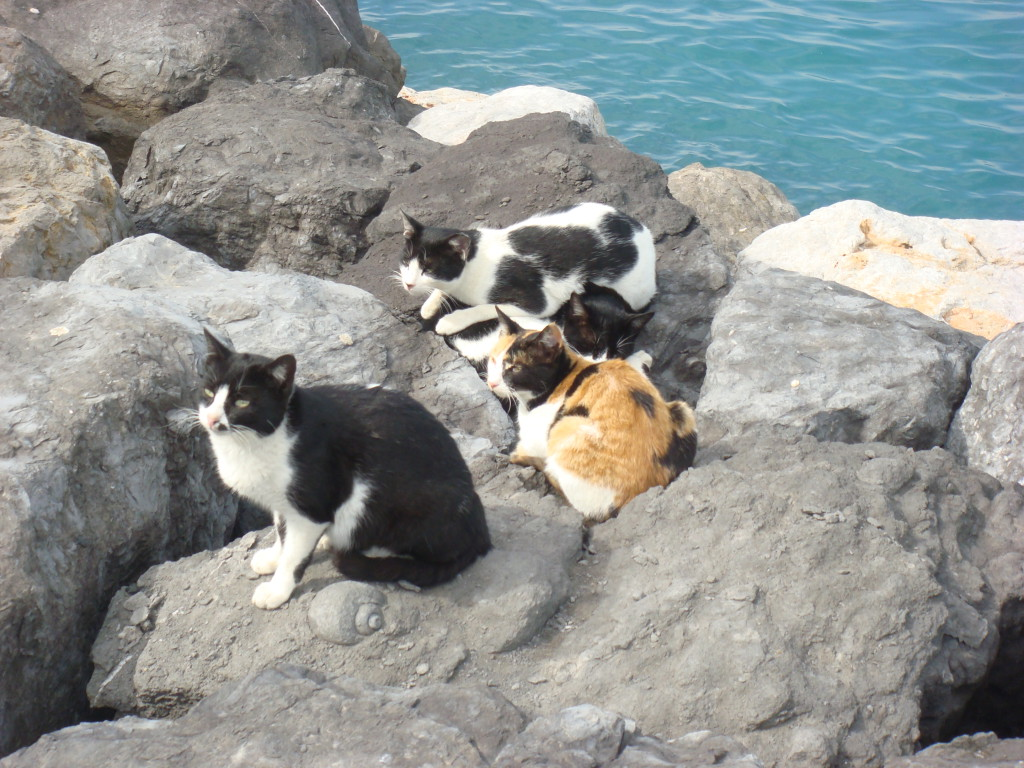 Cats_on_Beach