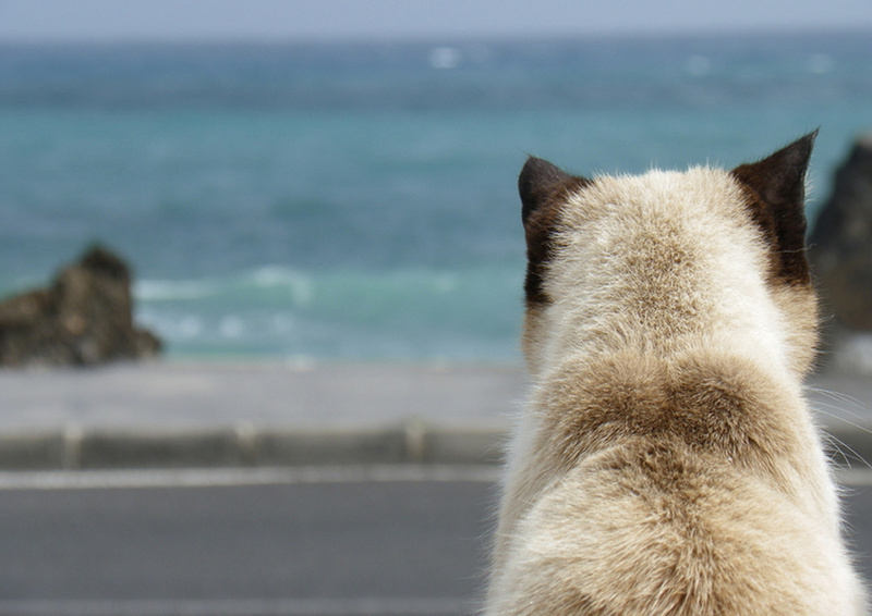 cat-at-the-beach