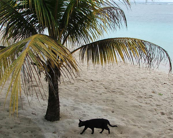 cat-palm-beach