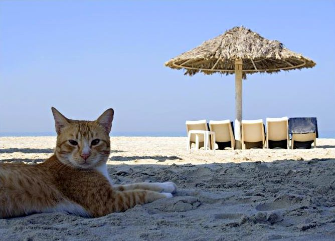 catonbeach